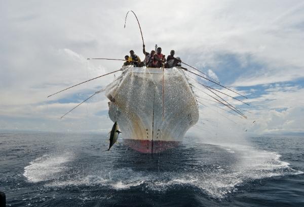 Pole and line fishing for yellowfin tuna