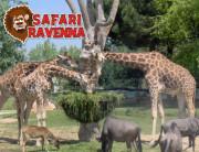 zoo-safari-ravenna